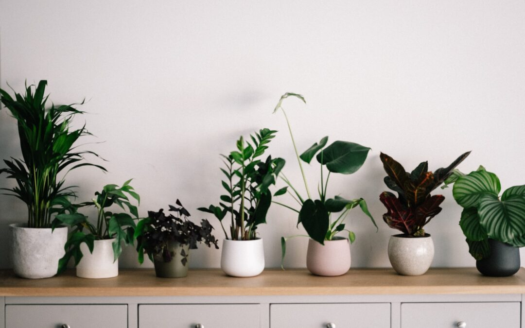 How to Move House Plants Long Distance