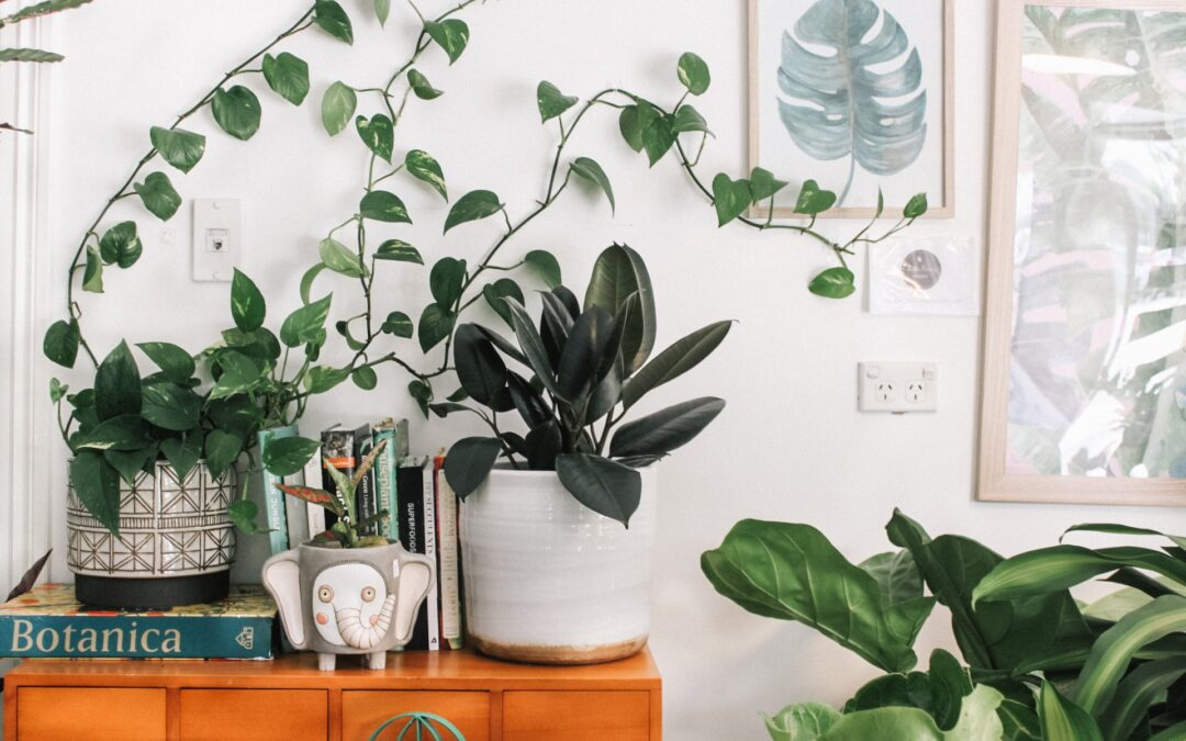 Choosing a Moving Company to Move Household Plants